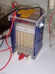 Western Blot Kammer - Molekularbiologie, Blotkammer, Western Blot, Proteine, elektrisches Feld