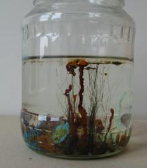 Chemischer Garten - Versuch, Experiment, Osmose, Membran, semipermeabel, Salz, Schwermetall, Natronwasserglas, Natriumsilikat