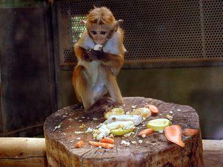 Affe - Affe, Käfig, Fütterung, Baumstamm, fressen
