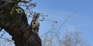 Osterhase im Kirschbaum - Ostern, Kirschbaum, Suchbild