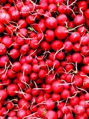 Radieschen - Radieschen, Gemüse, Wurzeln, Kreuzblütengewächs, Speicherknolle