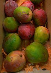 Mango - Mango, Mangifera indica, Mangifera