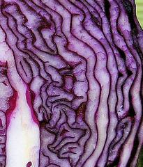 Was_ist_das#Pflanzen - Rotkohl, Kohl, Gemüse, Struktur, Fotorätsel