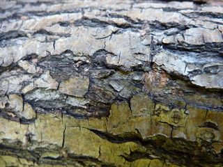 Was_ist_das#Pflanzen - Rinde, Holz, Holzrinde, Borke, Gehölz