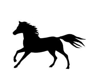 Pferd - Pferd, Schattenspiel