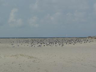 Sylt - Möwen, Strand, Sand, Weite, Meer, Himmel