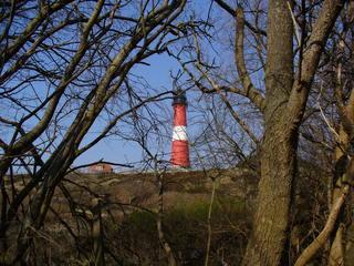 Sylt - Leuchtturm, Bäume, Baum, kahl, Düne