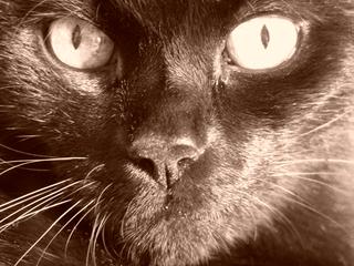 Nahaufnahme eines Katzengesichtes - Katze, Gesicht, Haustier, Pupille, Katzenauge, reflektieren, Auge, Nase, Schnurrhaare, riechen, sehen, tasten, Sinne, Nachtjäger, nachtaktiv