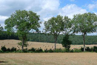 Landschaft  #2 - Herbst, Landschaft, Kellerwald, Kornfeld, Ernte