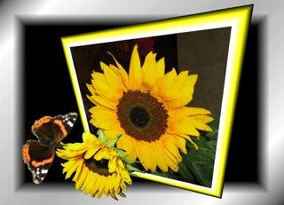 Aus dem Rahmen ... (2) - Sonnenblume, Schmetterling, Effektbild