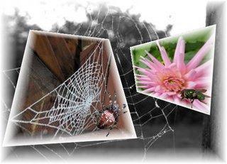 Aus dem Rahmen ... (4) - Spinne, Netz, Fliege, Collage, Effektbild