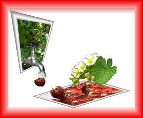 Aus dem Rahmen ... (5) - Erdbeere, Pflanze, Collage, Effektbild