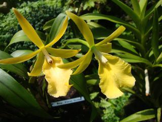 Orchidee_6 - Orchidee, Orchideen, Blüte, Blüten, Stempel, Pflanze, Pflanzen, Blume, Blumen