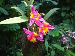 Orchidee_8 - Orchidee, Orchideen, Blüte, Blüten, Stempel, Pflanze, Pflanzen, Blume, Blumen
