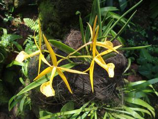 Orchidee_9 - Orchidee, Orchideen, Blüte, Blüten, Stempel, Pflanze, Pflanzen, Blume, Blumen