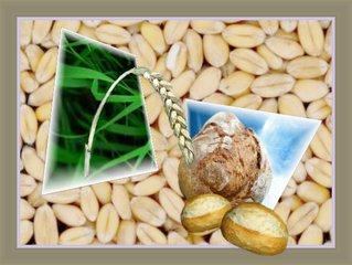 Aus dem Rahmen ... (8) - Collage, Weizen, Brot, essen, Perspektive, Effektbild