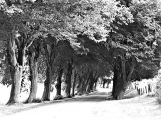 Allee - Allee, Bäume, Straße, Weg, Erzählanlass, Schreibanlass, Meditation, Kalenderbild, Fantasie, Perspektive, Fluchtlinien, Licht, Schatten