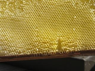 Bienenwaben - Biene, Waben, Bienenwachs, Wabengebilde, Zellen, Bienenhaltung