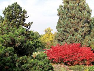 Herbststimmung #2 - Herbst, Herbststimmung, Herbstfarben, Farbe, rot, orange, braun, Natur, Garten, Park, Berggarten