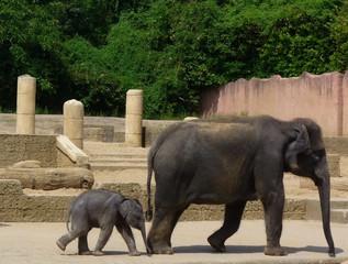 Elefanten - Elefanten, Mutter und Kind, Zoo, Rüsseltier, Dickhäuter, Afrika, Asien, Stoßzähne, Elfenbein