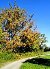 Herbstfärbung#1 - Herbst, bunt, Laub, Laubfärbung, goldener Oktober, Weg, Meditation, Schreibanlass