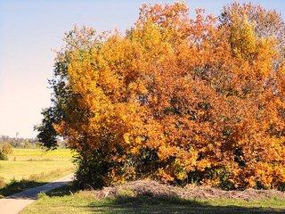 Herbstfärbung#2 - Laub, Herbst, Laubfärbung, bunt, Oktober