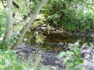 Ufer#2 - Ufer, See, Verlandung, trocknen, austrocknen, Sukzession, Verflachung, verflachen, Moor, feucht, Feuchtgebiet, Veränderung