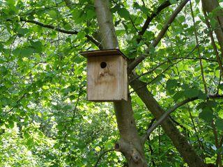 Nisthilfe - Nisthilfe, Brut, Artenschutz, Vogelschutz, Vogel