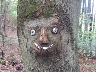 Baumgesicht - Baum, Gesicht, Natur, Kurioses, Schreibanlass, Rinde