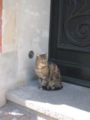 Cafè Mietze - Haustier, Katze, grau, getigert