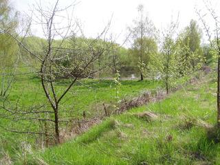 Frühling am Weiher - Frühling, Weiher, Jahreszeit, grün, Gewässer, Landschaft, Gras, Wiese