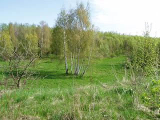 Frühling#1 - Frühling, Jahreszeit, grün, Waldrand, Landschaft, Wiese, Wald