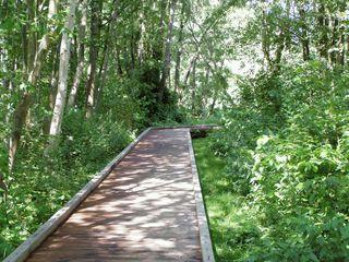 Wege#10 - Weg, Wege, Pfad, Meditation, Bildimpuls