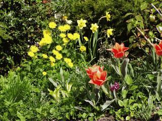 Frühlingsbeet - Frühling, Blumen, Tulpen, Hyazinthen, Osterglocken