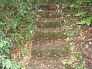 Treppe - Treppe, feucht, Moos, verwachsen, Meditation, Stufen, Stiege